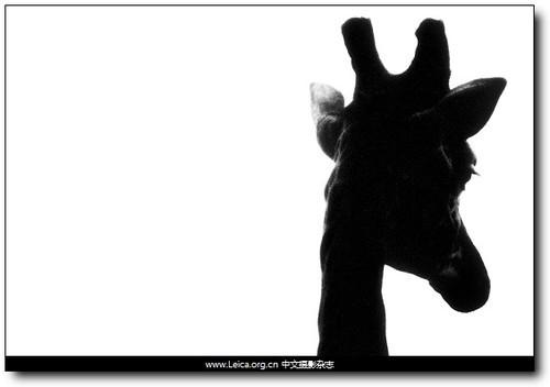 动物的幽灵 britta jaschinski作品赏析