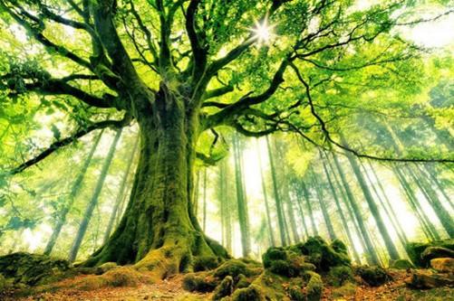 世界各地最美麗的樹 高清風景攝影圖賞-中關村在線