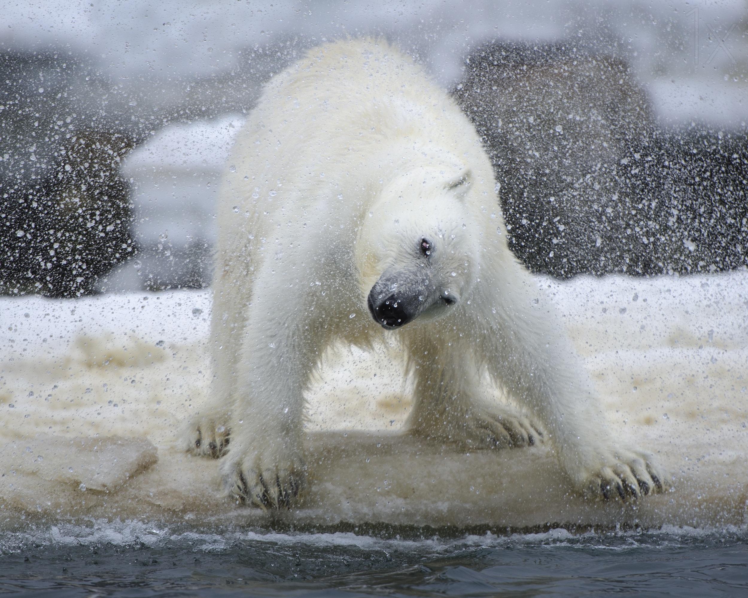 让人会心一笑 有趣的动物摄影作品欣赏