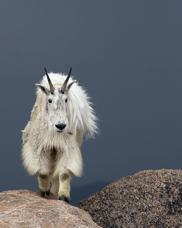 有趣的动物摄影作品欣赏