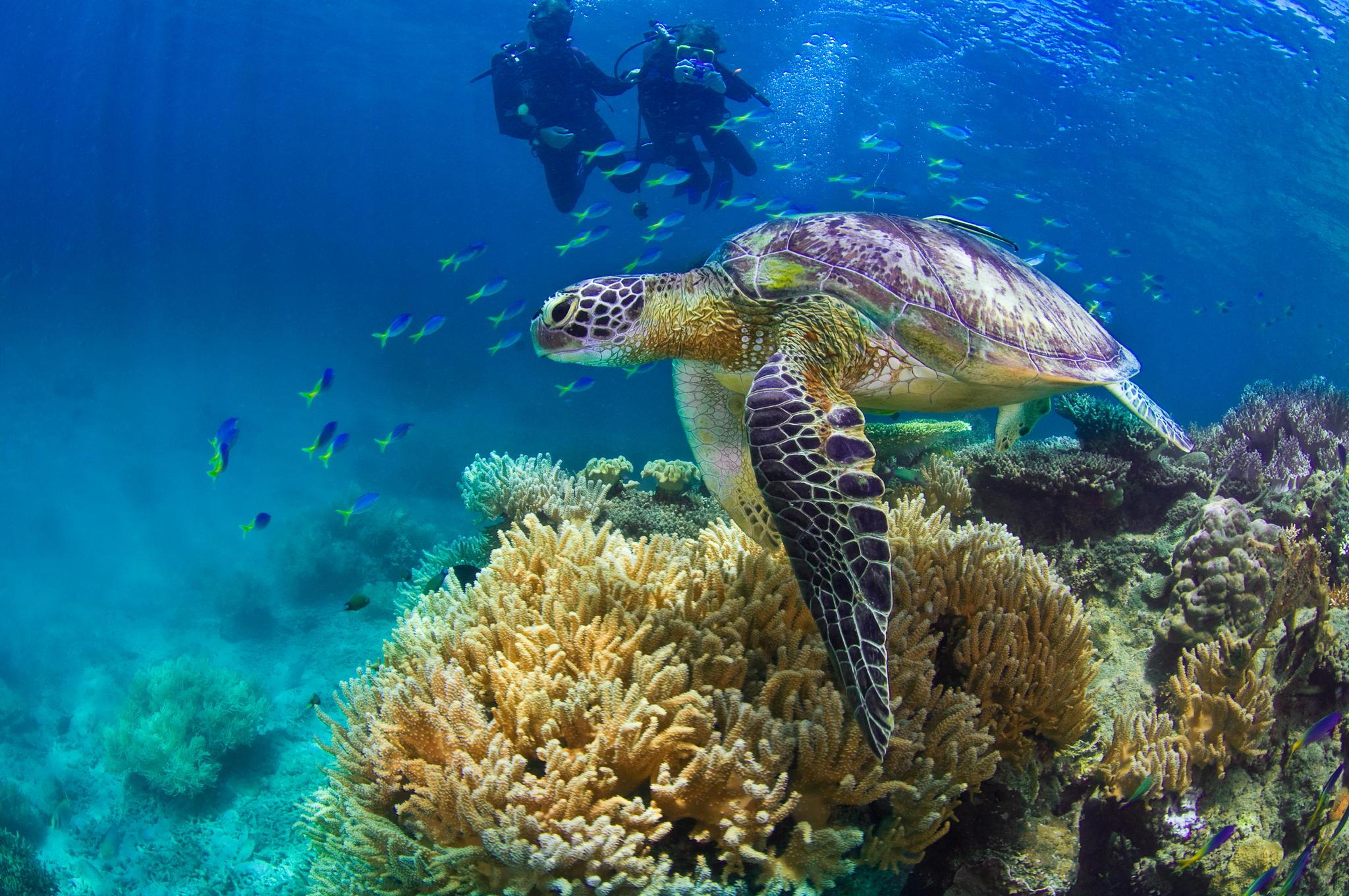 【高清图】可爱的海洋生物