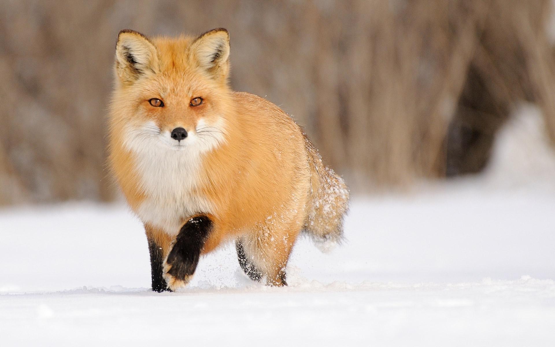 动物百态众生相:撩动人心的动物肖像