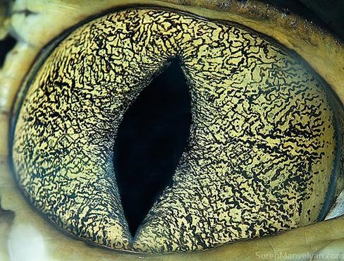 动物的眼睛 震撼超近距离摄影作品欣赏-中关村在线