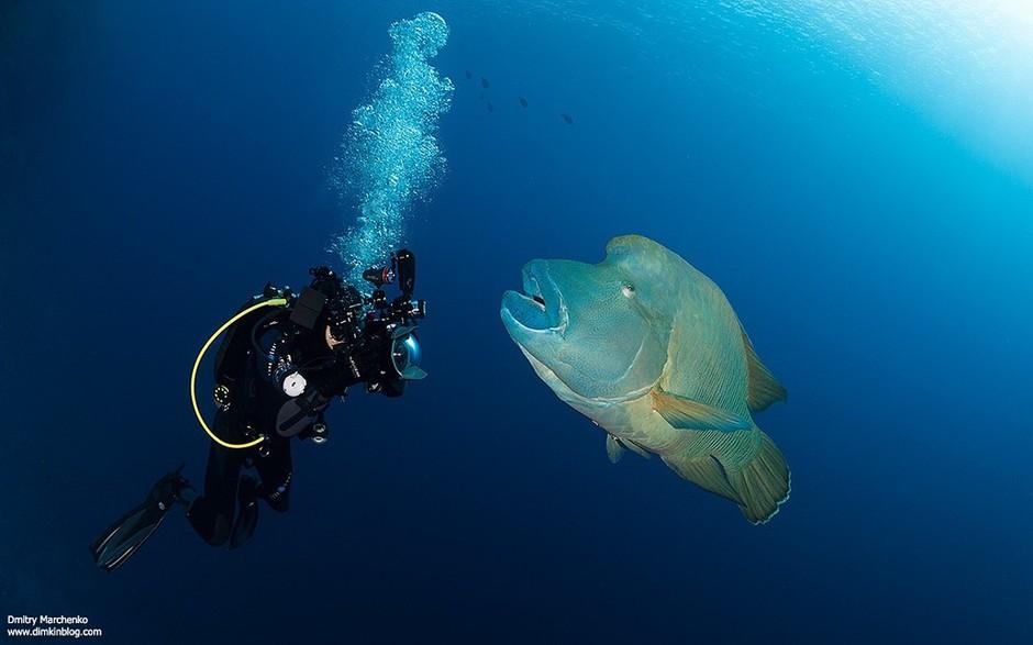 呆萌的海龟 神奇绚丽的海底世界影像