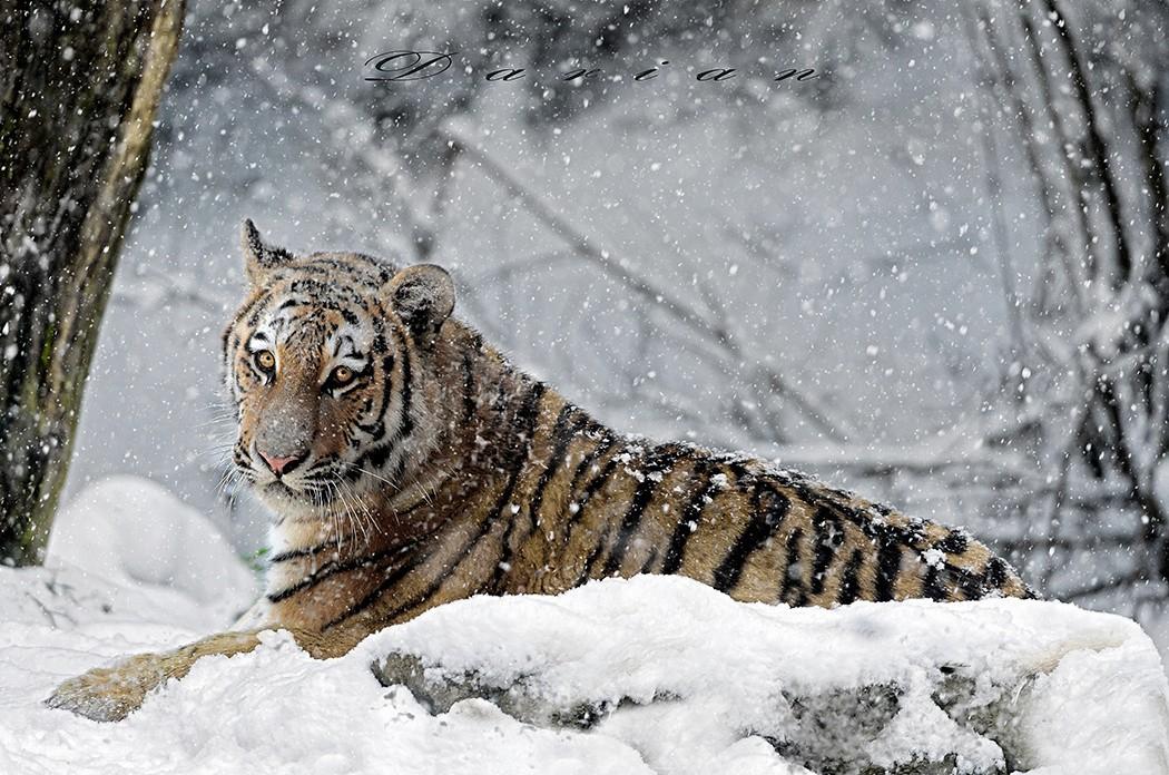 大型猫科动物的精彩照片