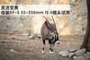 灵活变焦 佳能EF-S 55-250mm IS II镜头试用