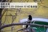 远射法宝 佳能EF-S 55-250mm IS II打鸟体验