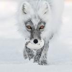 张张都是艺术品 野生动物摄影大赛作品赏