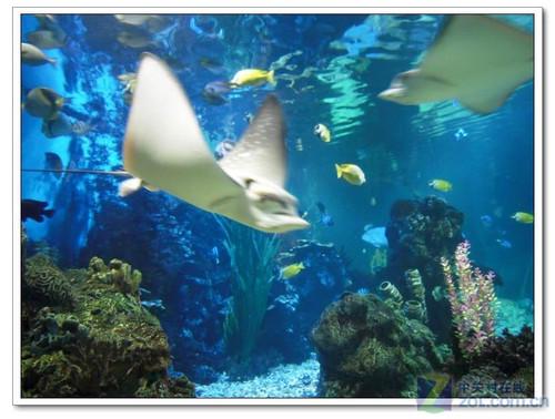 壁纸 动物 海底 海底世界 海洋馆 水族馆 鱼 鱼类 500_378