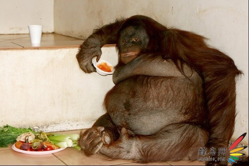 展示了在日常生活中难得一见的肥胖不堪的鸽子,松鼠和猩猩等动物的