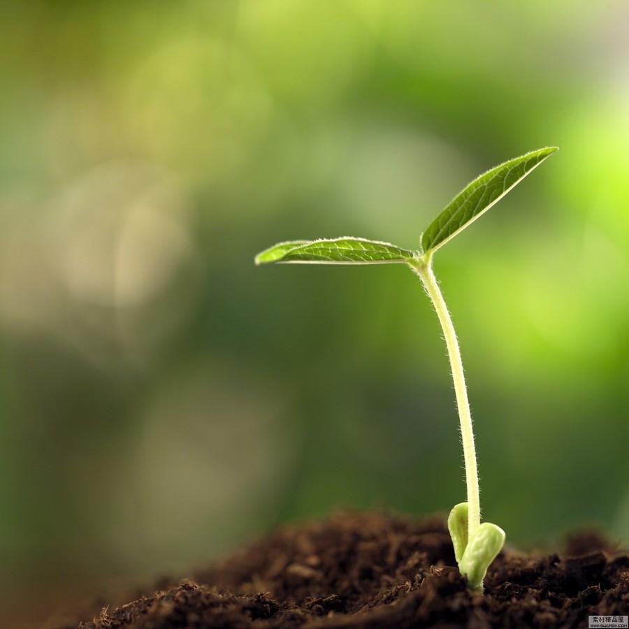 【高清图】 感受生命的力量 植物种子发芽高清组图图6