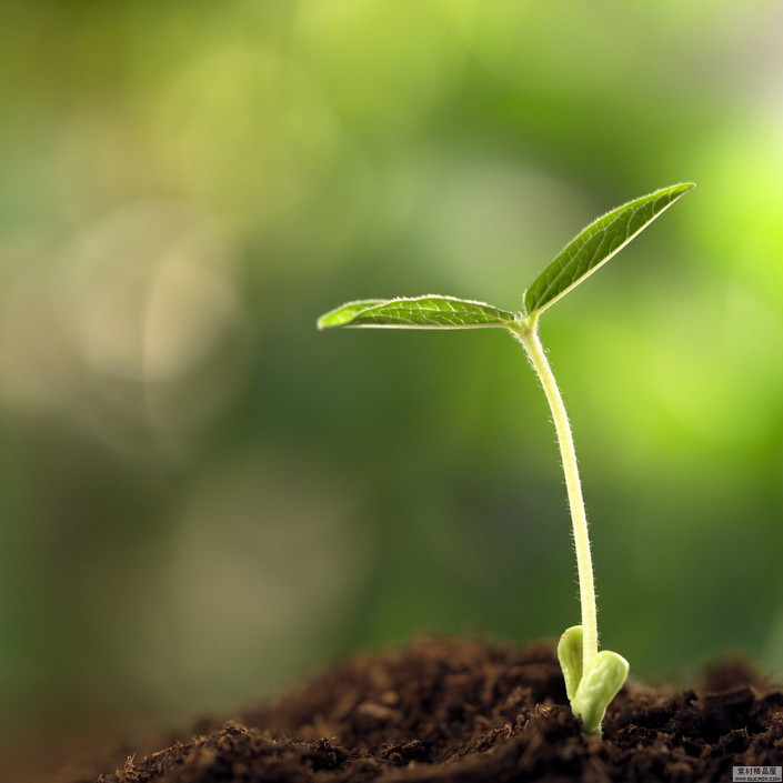 植物种子发芽高清组图