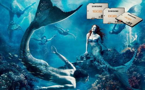 壁纸 海底 海底世界 海洋馆 水族馆 桌面 500_312