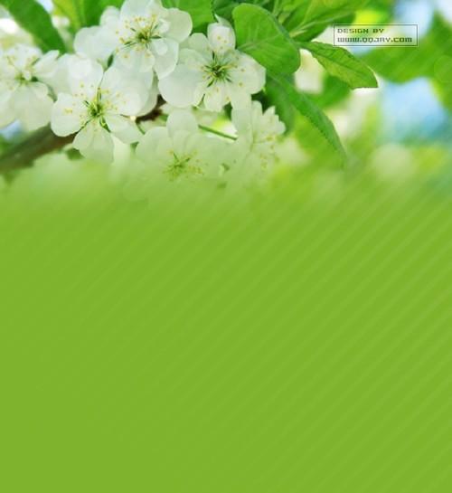 美丽清新的花朵QQ皮肤 樱花树下诺言